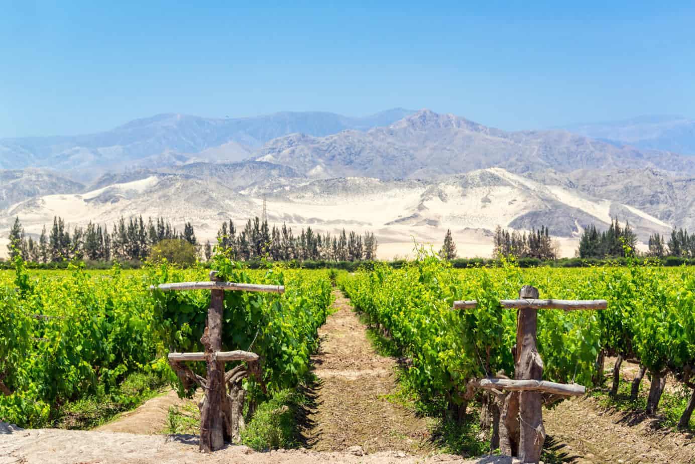 Lush Pisco Wijngaard in Peru