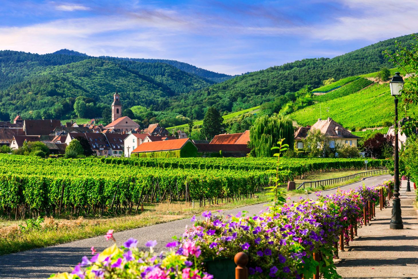 Wijnbouw, Ribeauville