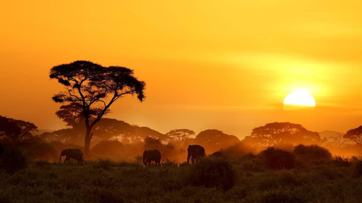 Op safari in Kenia? Vraag nu jouw visum aan